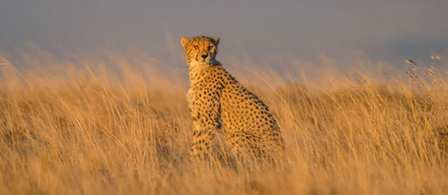 Wildlife at Mountain Zebra National Park, SANParks, www.eastern-cape-info.co.za